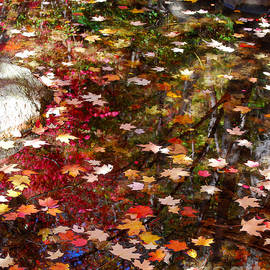 Nancy Mueller - Autumn Leaves Reflections