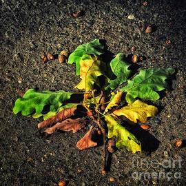 Autumn LF - SK Pfphotography