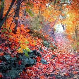 Tara Turner - Autumn Light at the End of the Path