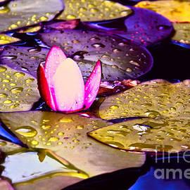 Mariola Bitner - Autumn Lily