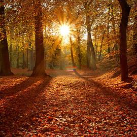 Roeselien Raimond - Autumn Magic