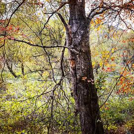 Debra and Dave Vanderlaan - Autumn Meadow