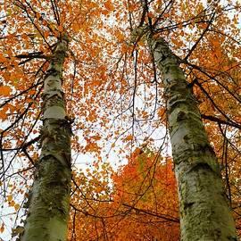 Kimberly Benedict - Autumn Minnesota
