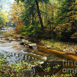 Thomas R Fletcher - Autumn Mist along Williams River