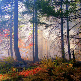 Diane Schuster - Autumn Morning Fire And Mist