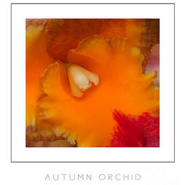 Mike Nellums - Autumn Orchid poster