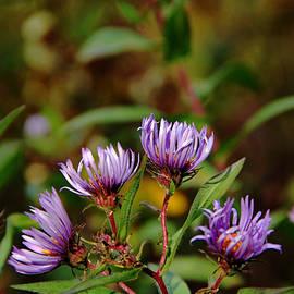 Debbie Oppermann - Autumn Purple