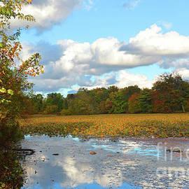 Robyn King - Autumn Reflections Meditation Art