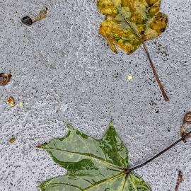Kathy Barney - Autumn Sidewalk Leaf Palette