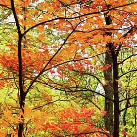 Dan Carmichael - Autumn Splendor Fall Colors Leaves and Trees AP