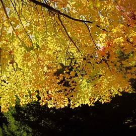 Elizabeth Tillar - Autumn Splendour