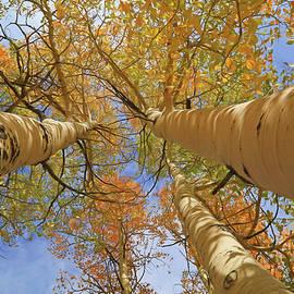 Donna Kennedy - Autumn Straight Up