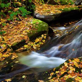 Amy Jackson - Autumn Stream