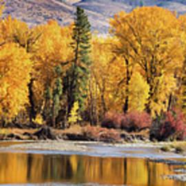 Mary Jo Allen - Autumn Stream
