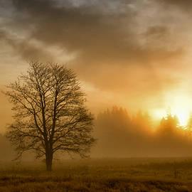 Mohammed Gammal - Autumn sunrise