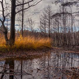 Dmytro Korol - Autumn Swamp