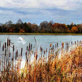 Darren Fisher - Autumn Swan