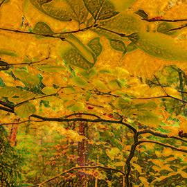 Susan Fernandez - Autumn Tones