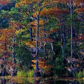 Cynthia Guinn - Autumn Trees