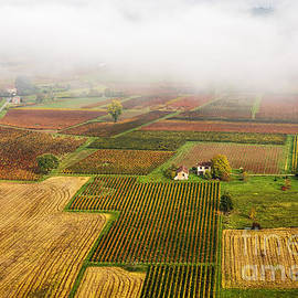Tony Priestley - Autumn Vines