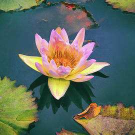 Autumn Waterlily - Jessica Jenney