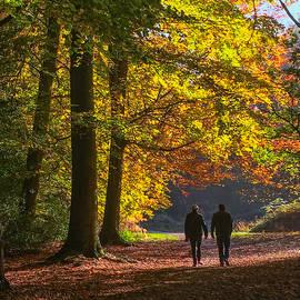 Mo Barton - Autumn Woodland Walk