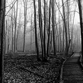 Debbie Oppermann - Autumn Woods Black And White