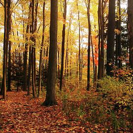Debbie Oppermann - Autumn Woods