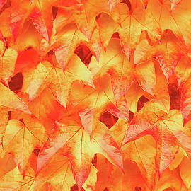 Iryna Burkova - Autumnal