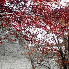 Susan Maxwell Schmidt - Autumn