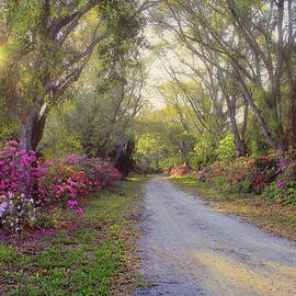 HH Photography of Florida - Azalea Lane by H H Photography of Florida