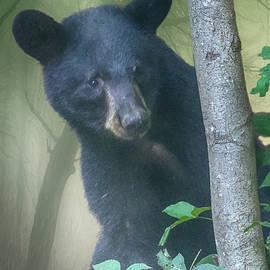 John Haldane - Baby Bear Takes a Peek