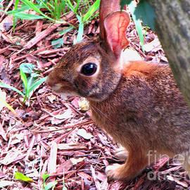 Gardening Perfection - Baby Bunny