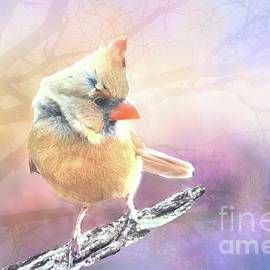Janette Boyd - Baby Female Cardinal in Springtime
