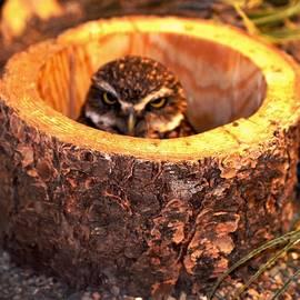 Anand Swaroop Manchiraju - Baby Owl
