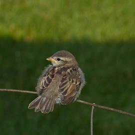 Kristine Patti - Baby Sparrow