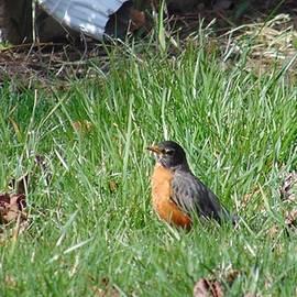 Charlotte Gray - Backyard Robin