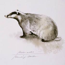 Attila Meszlenyi - Badger, watercolor