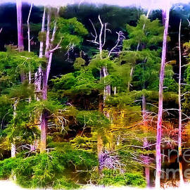 Judi Bagwell - Baldcypress Swamp