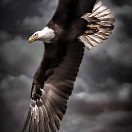 Wes and Dotty Weber - Bald Eagle At Dusk D3876