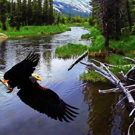 Terril Heilman - Bald Eagle At Long Lake