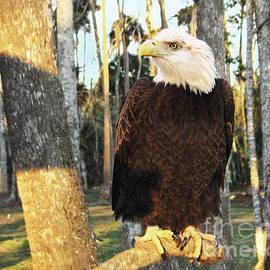 Sabrina Wheeler - Bald Eagle in Florida