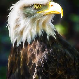 Linda Tiepelman - Bald Eagle