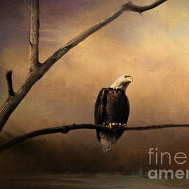 Pam  Holdsworth - Bald Eagle on a Branch