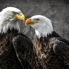 Wes and Dotty Weber - Bald Eagle Pair D2512