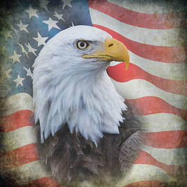 Angie Vogel - Bald Eagle with American Flag