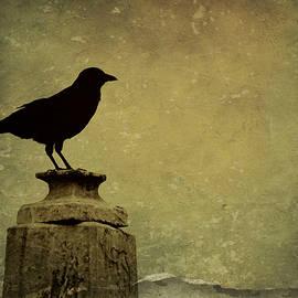 Brenda Conrad - Baltimore Raven