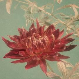 Amy Shumway - Bamboo Dahlia