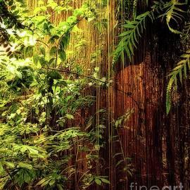 Donna Cain - Bamboo Jungle