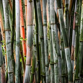 Bamboo Seduction